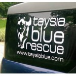Taysia Blue Logo Window Sticker