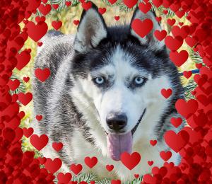 Mascha | Valentine Dog!