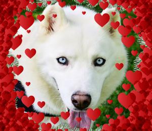 Cinderella | Valentine Dog!