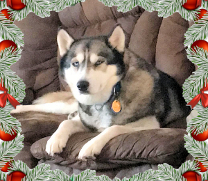 Opal | Holiday Dog!