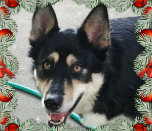Ayanna | Holiday Dog!